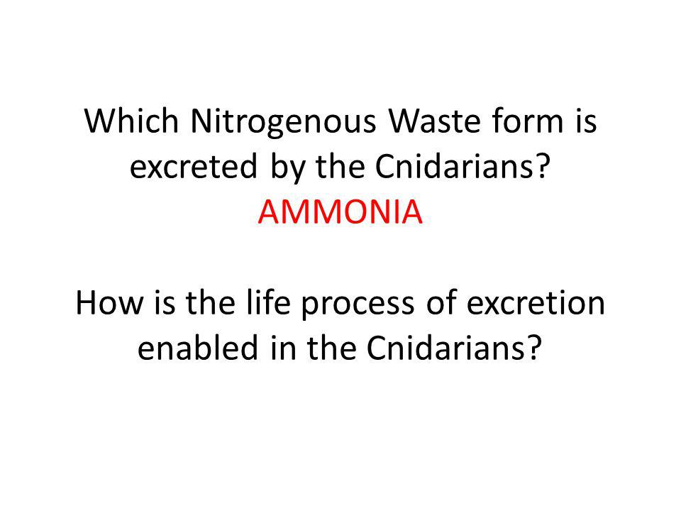 Which Nitrogenous Waste form is excreted by the Cnidarians