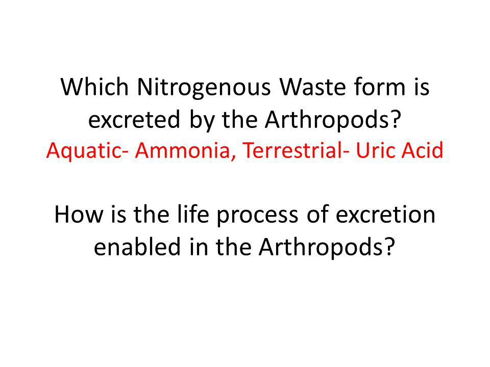 Which Nitrogenous Waste form is excreted by the Arthropods