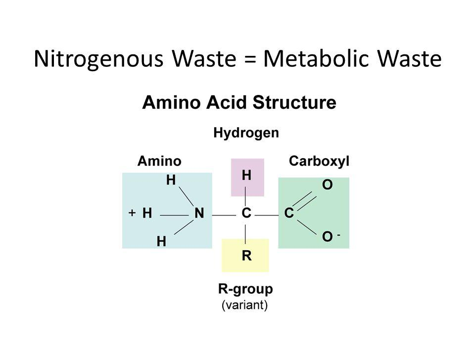 Nitrogenous Waste = Metabolic Waste