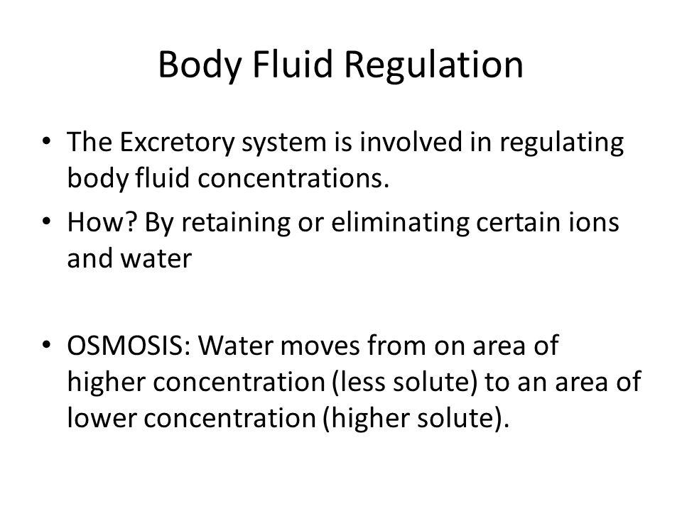 Body Fluid Regulation The Excretory system is involved in regulating body fluid concentrations.