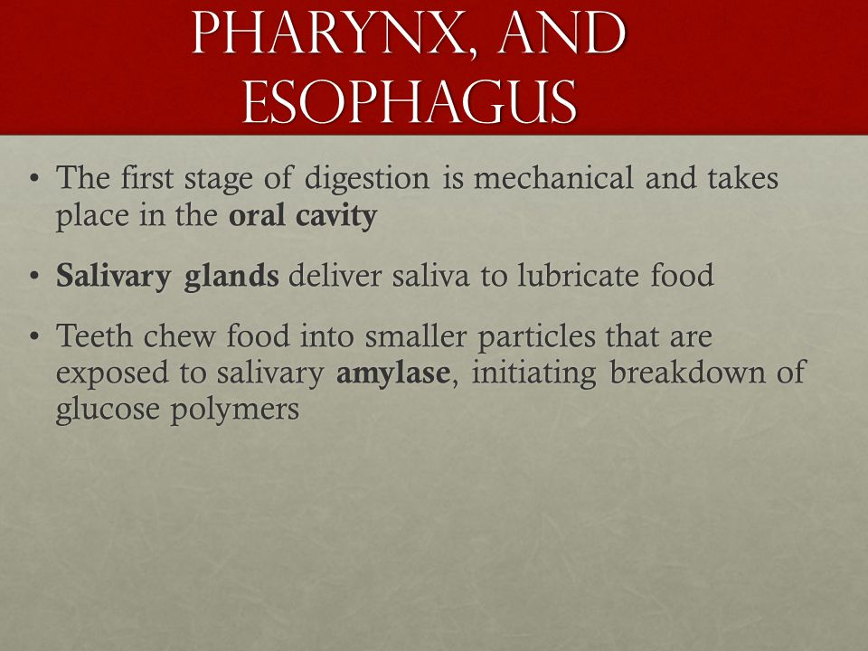 The Oral Cavity, Pharynx, and Esophagus