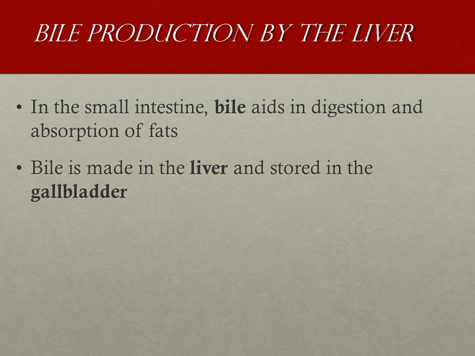 Bile Production by the Liver