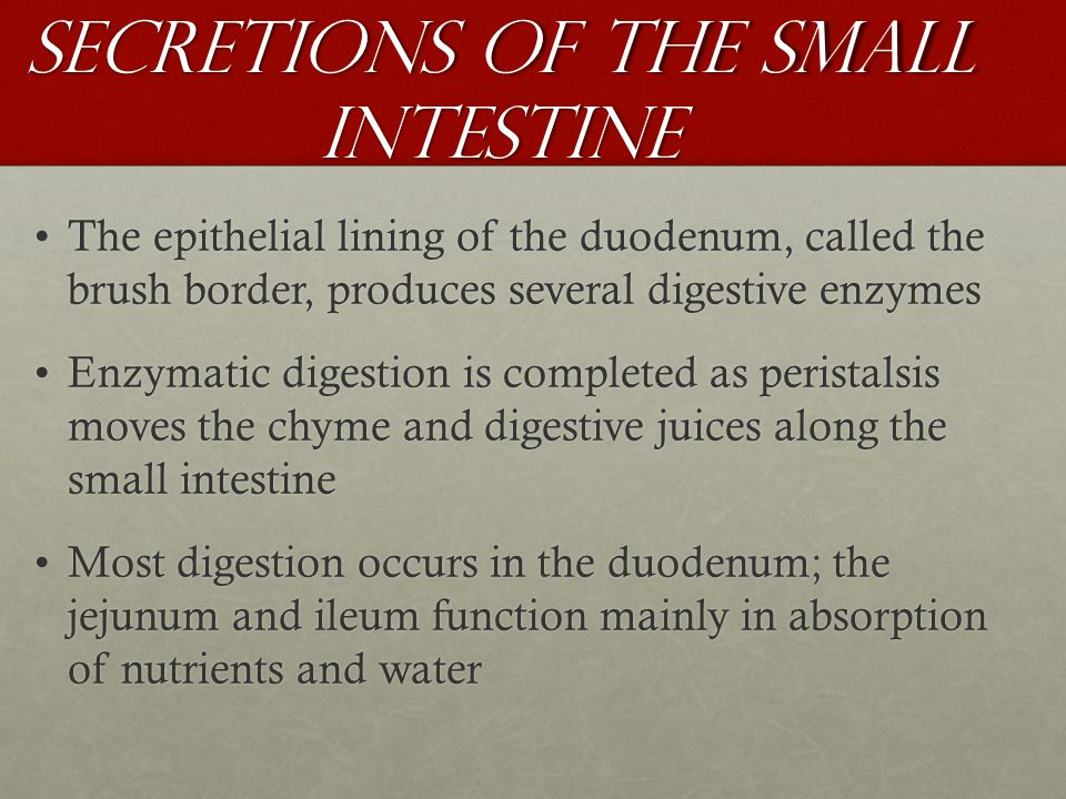 Secretions of the Small Intestine