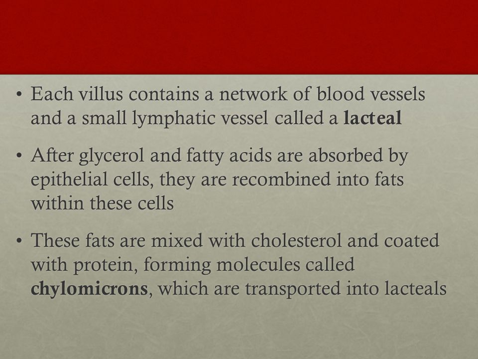 Each villus contains a network of blood vessels and a small lymphatic vessel called a lacteal