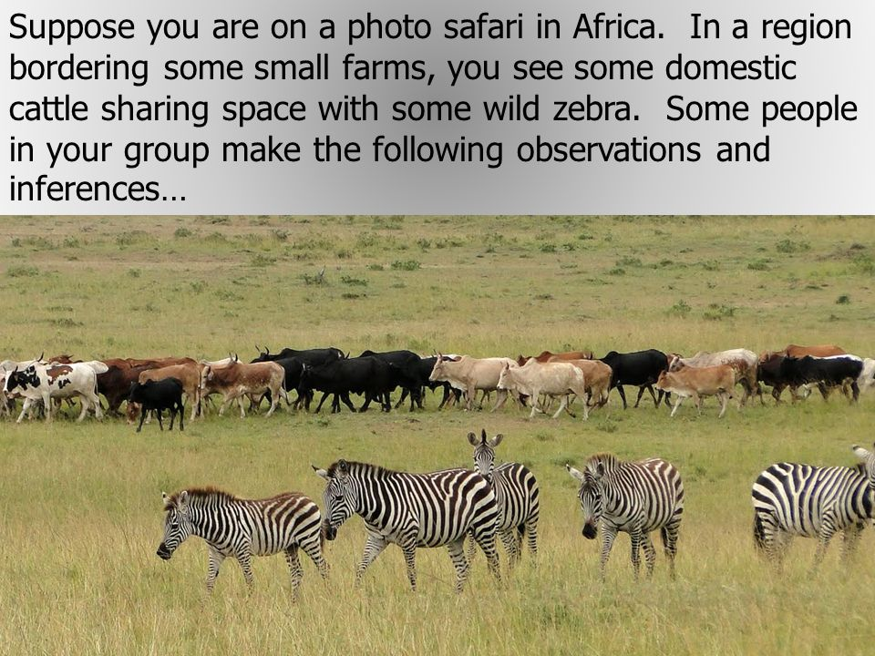 Suppose you are on a photo safari in Africa