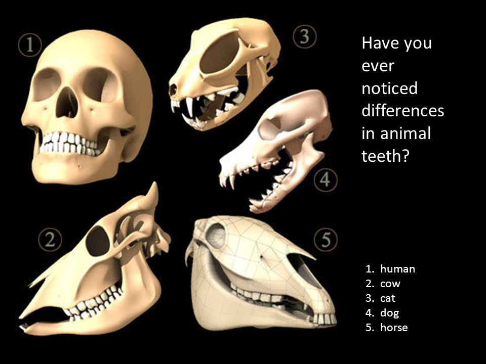 Have you ever noticed differences in animal teeth