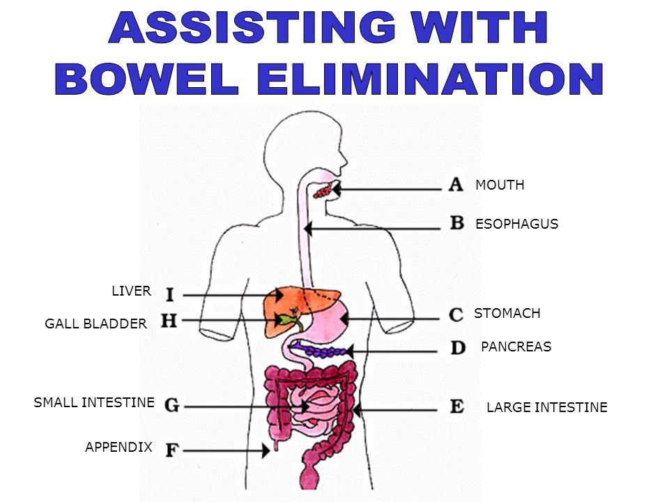 ASSISTING WITH BOWEL ELIMINATION MOUTH ESOPHAGUS LIVER STOMACH