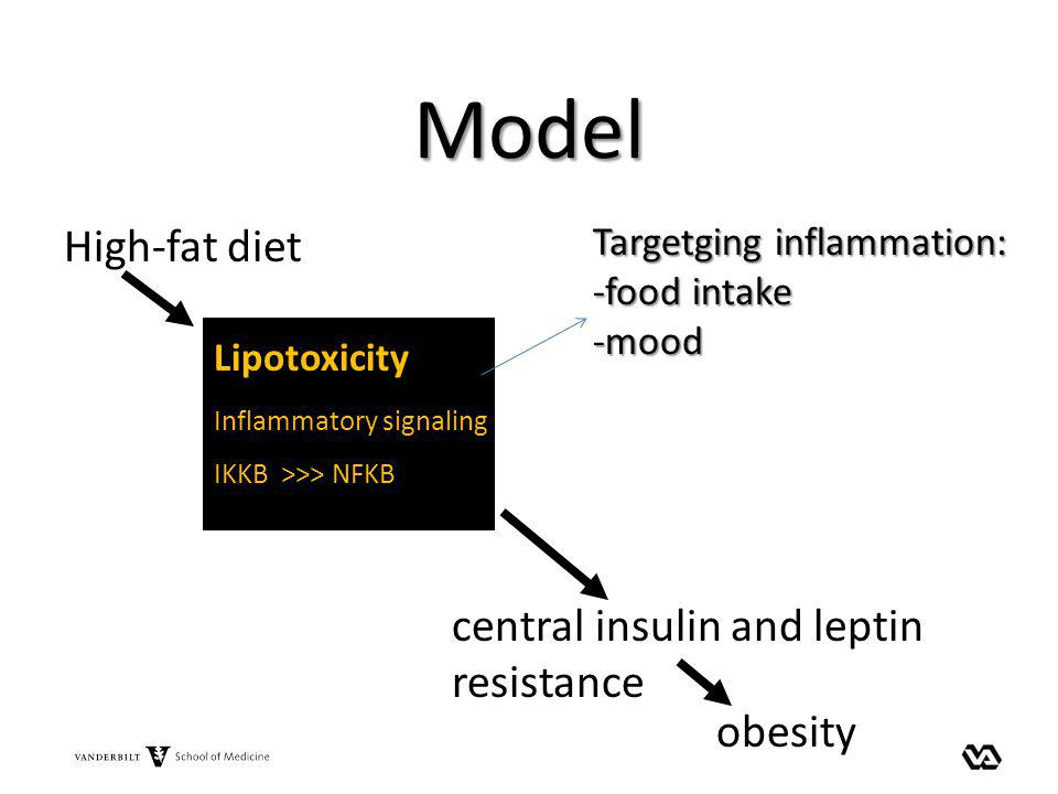 Model High-fat diet central insulin and leptin resistance obesity