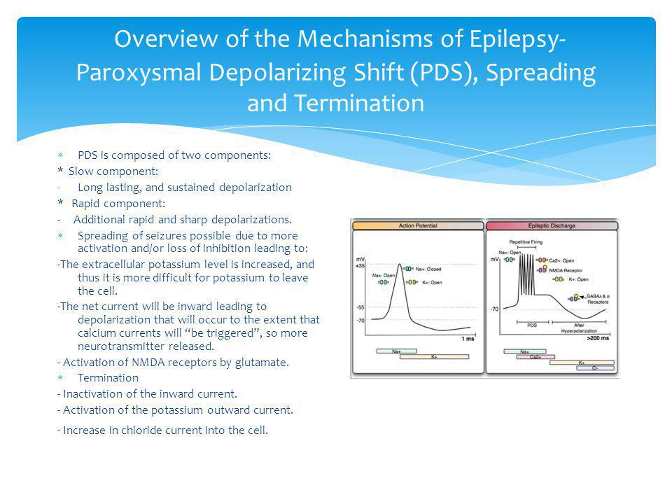 Overview of the Mechanisms of Epilepsy-Paroxysmal Depolarizing Shift (PDS), Spreading and Termination