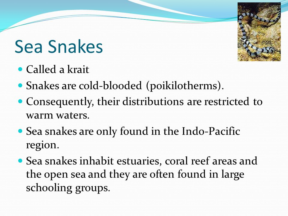 Sea Snakes Called a krait Snakes are cold-blooded (poikilotherms).