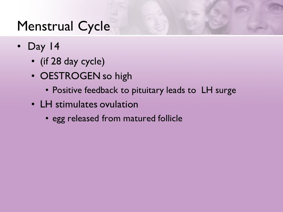 Menstrual Cycle Day 14 (if 28 day cycle) OESTROGEN so high