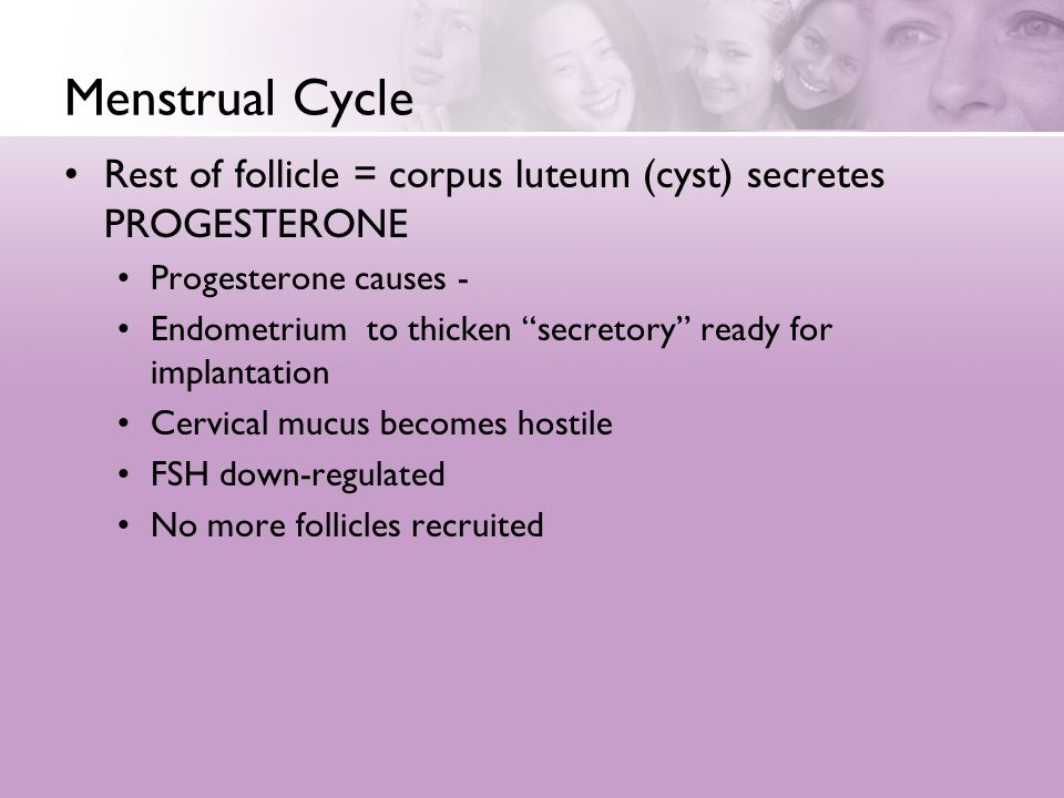 Menstrual Cycle Rest of follicle = corpus luteum (cyst) secretes PROGESTERONE. Progesterone causes -