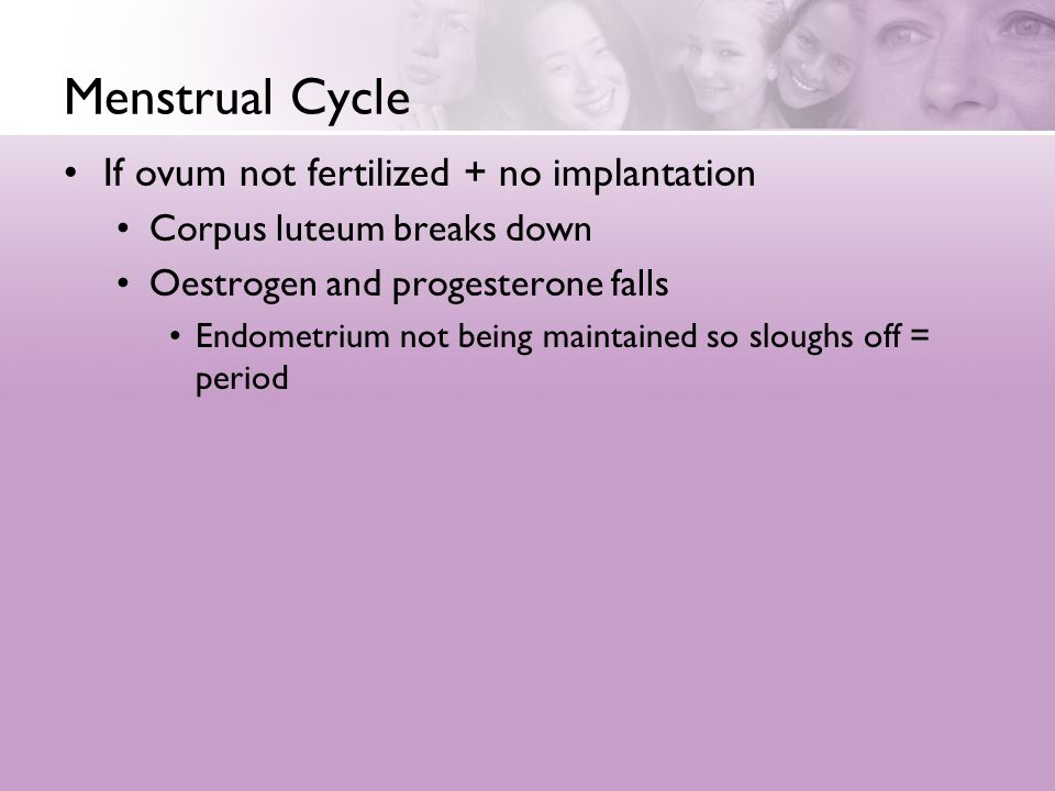 Menstrual Cycle If ovum not fertilized + no implantation