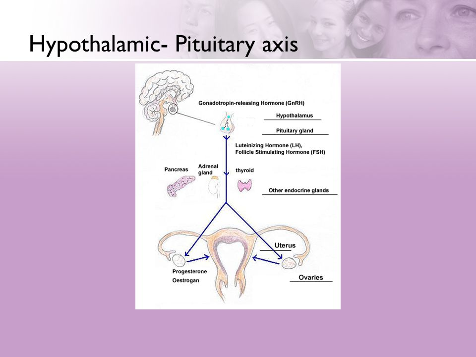 Hypothalamic- Pituitary axis