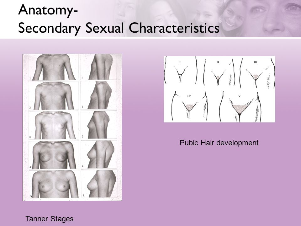 Anatomy- Secondary Sexual Characteristics