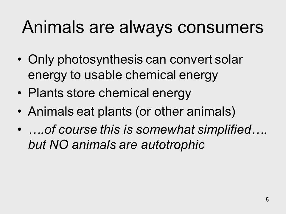 Animals are always consumers