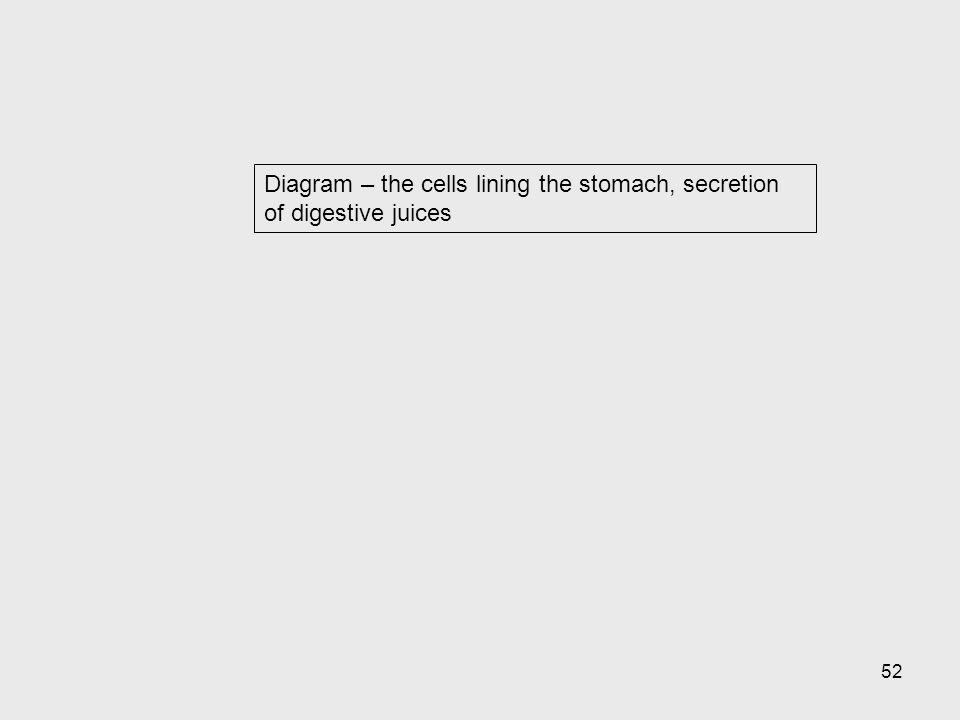 Diagram – the cells lining the stomach, secretion of digestive juices