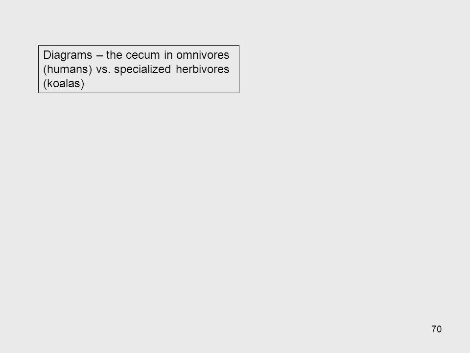 Diagrams – the cecum in omnivores (humans) vs
