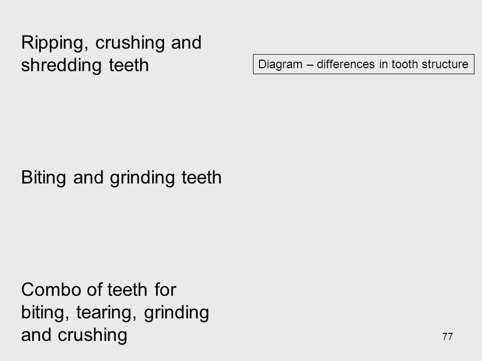 Ripping, crushing and shredding teeth