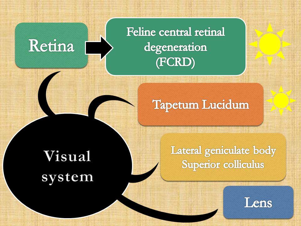 Retina Visual system Lens Tapetum Lucidum Feline central retinal