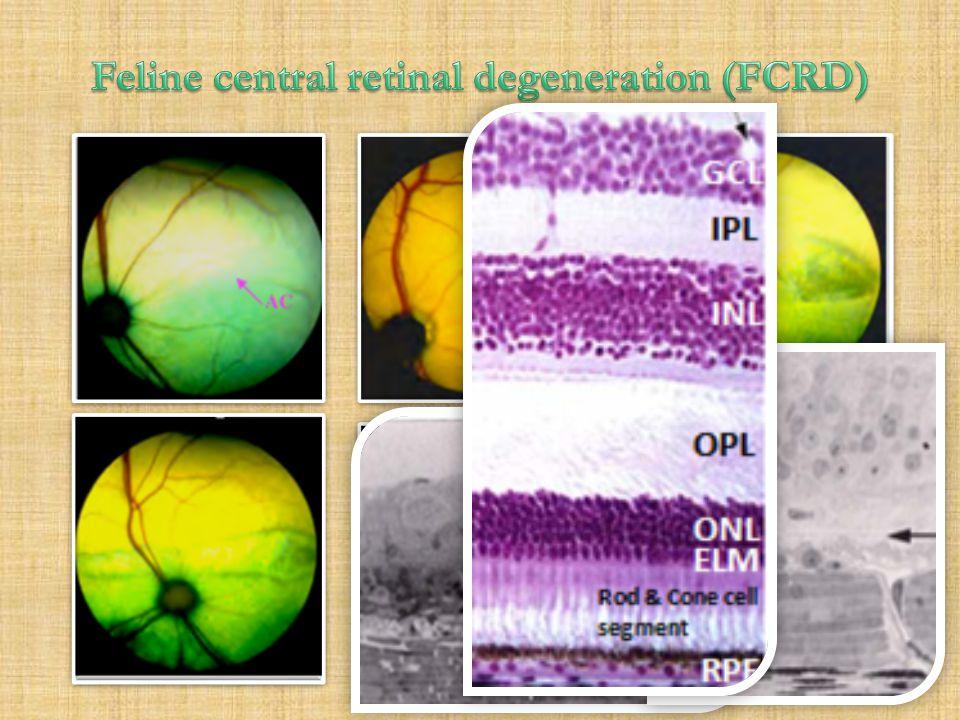 Feline central retinal degeneration (FCRD)