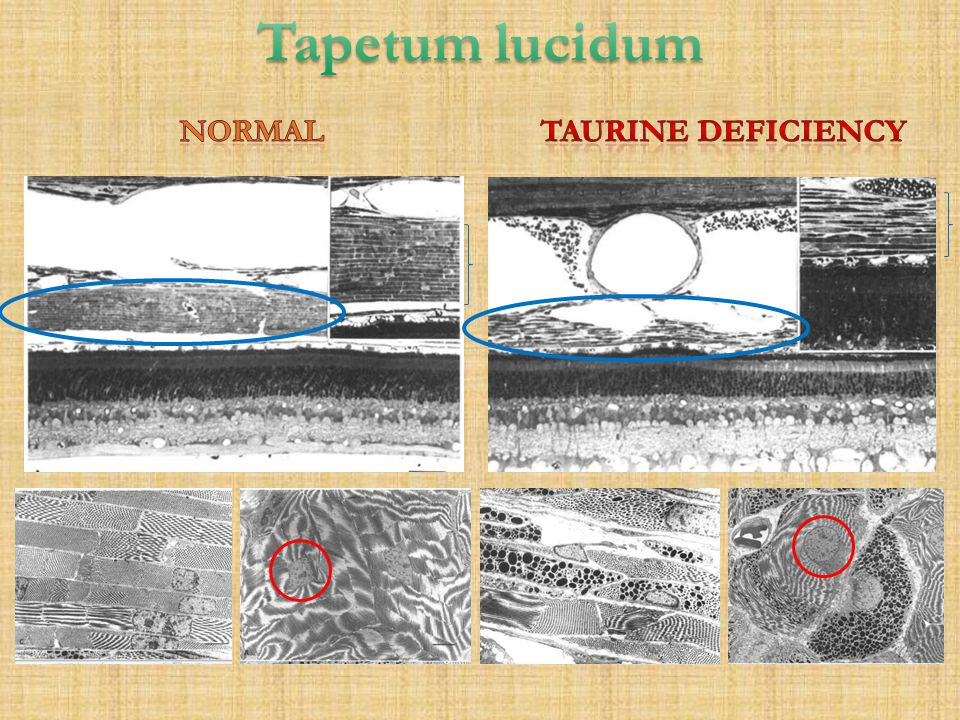 Tapetum lucidum normal Taurine deficiency