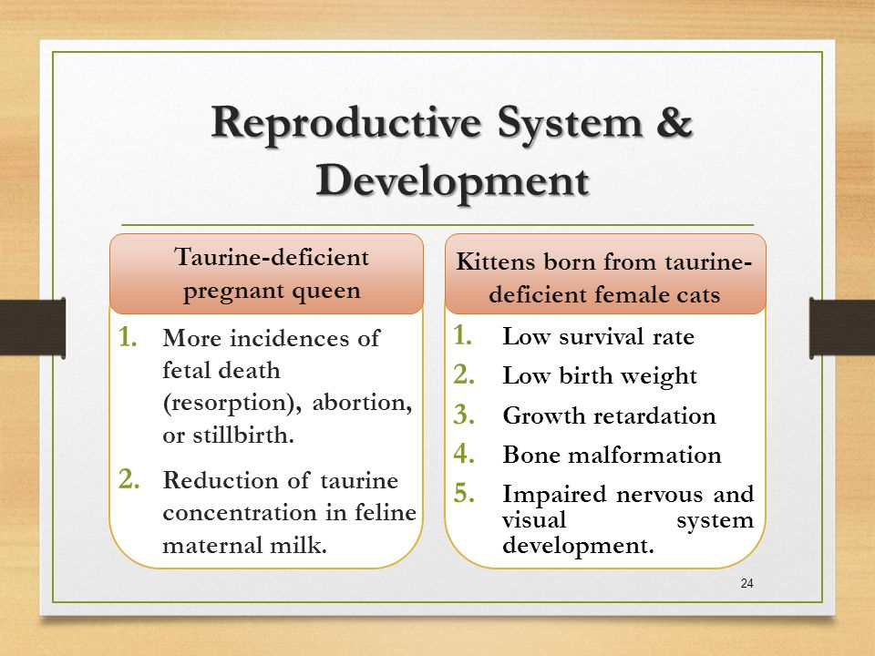 Reproductive System & Development