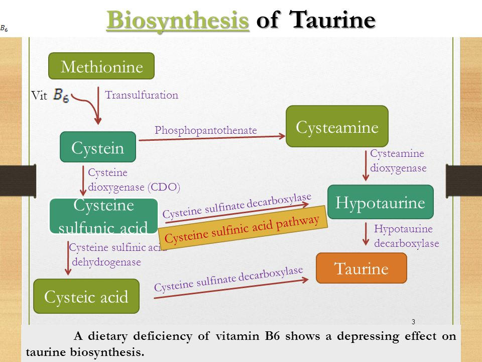 Biosynthesis of Taurine
