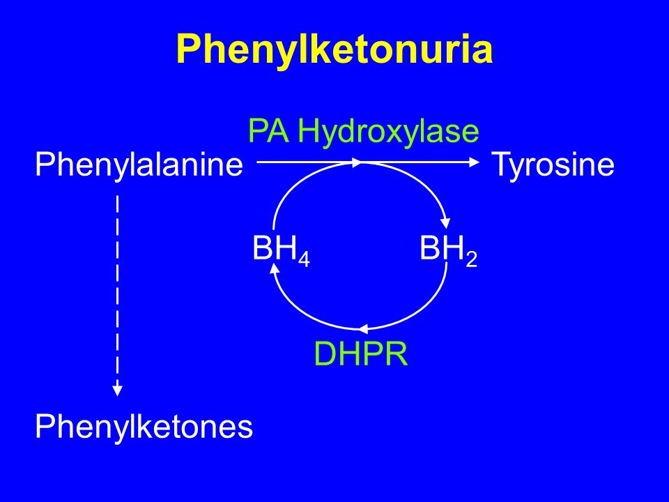 Phenylketonuria PA Hydroxylase Phenylalanine Tyrosine BH4 BH2 DHPR