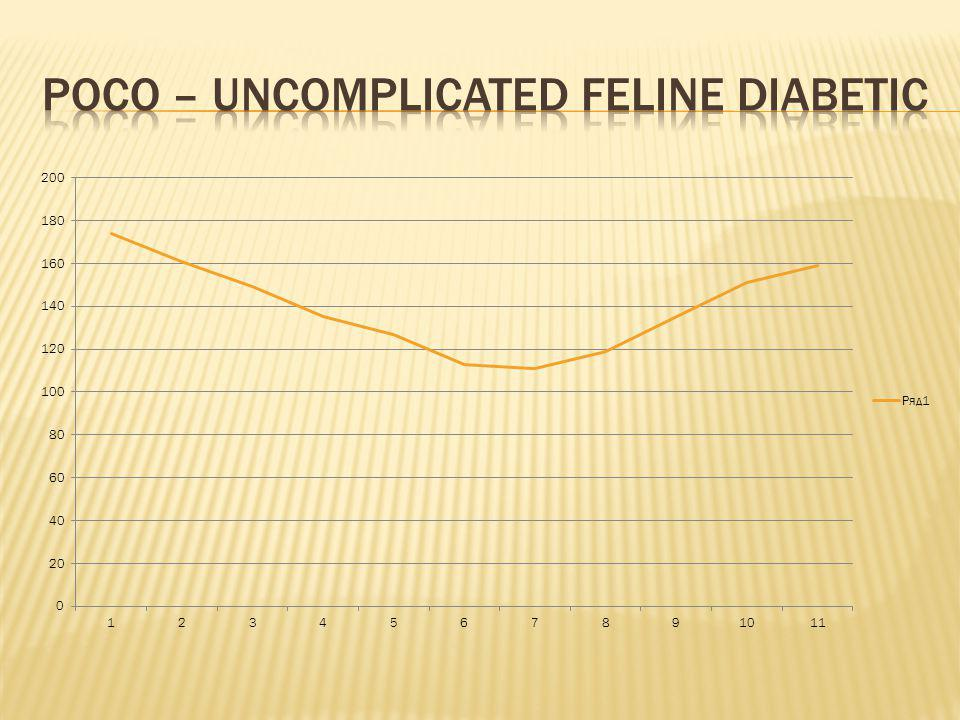 Poco – uncomplicated feline diabetic