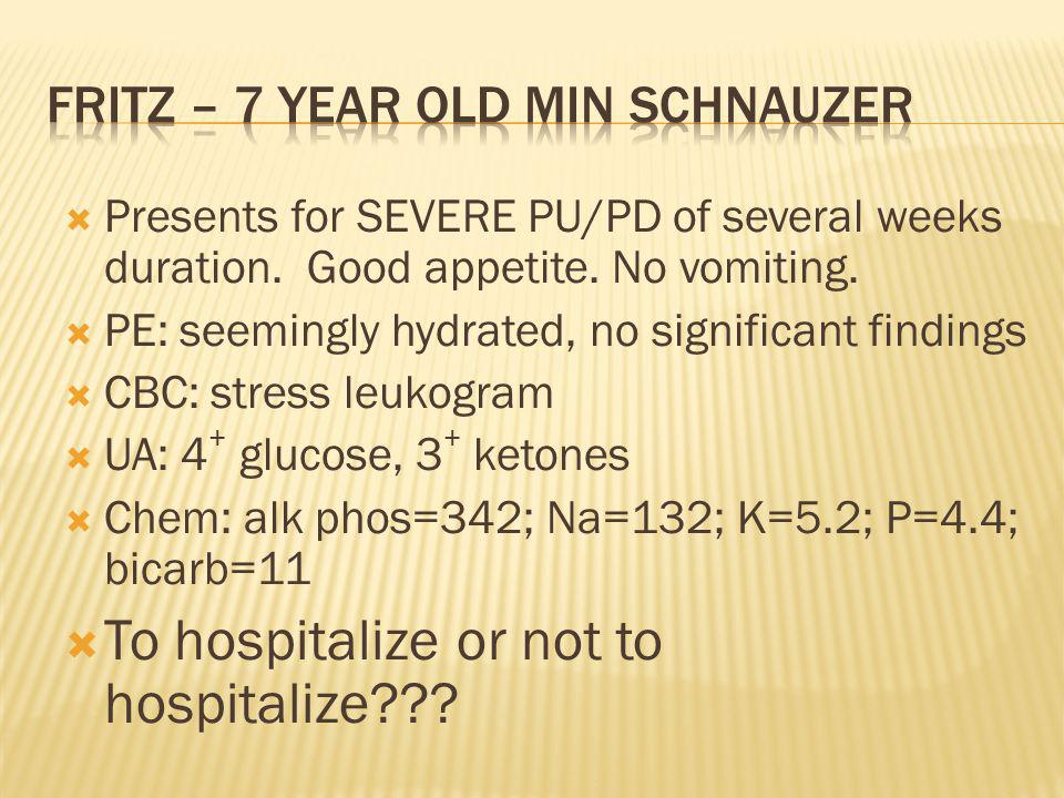 Fritz – 7 year old min schnauzer
