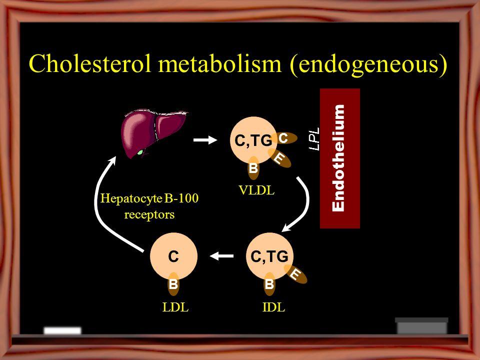 Cholesterol metabolism (endogeneous)