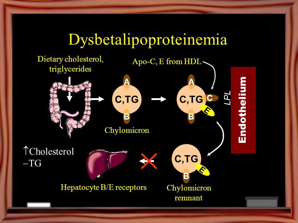 Dysbetalipoproteinemia