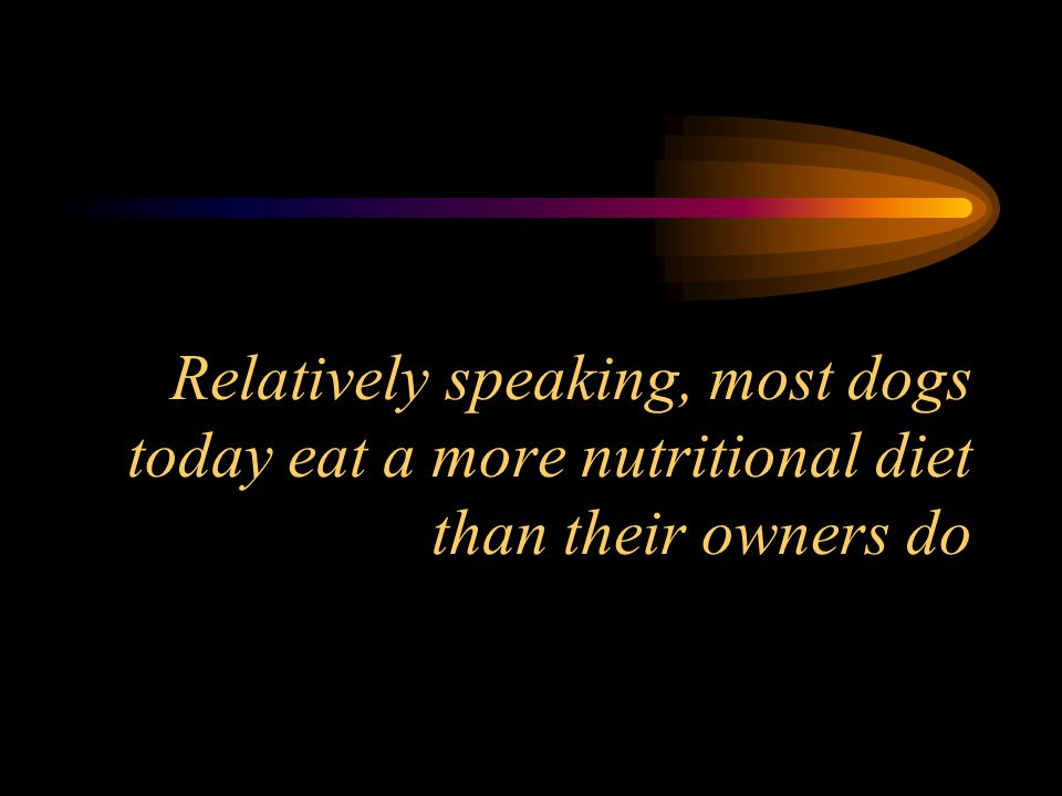 Relatively speaking, most dogs today eat a more nutritional diet than their owners do