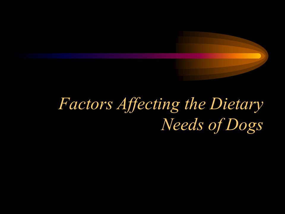 Factors Affecting the Dietary Needs of Dogs
