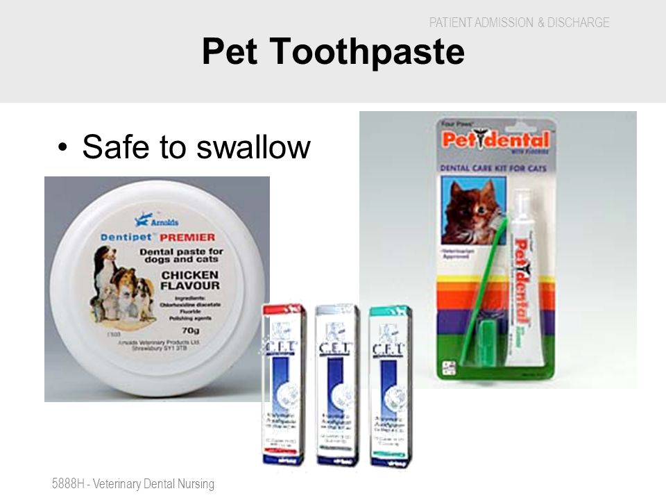 Pet Toothpaste Safe to swallow 5888H - Veterinary Dental Nursing