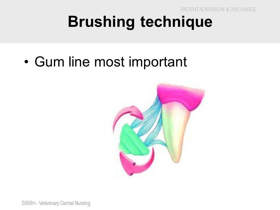 Brushing technique Gum line most important