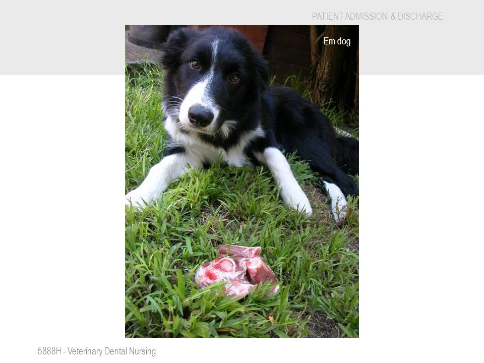 S Em dog 5888H - Veterinary Dental Nursing