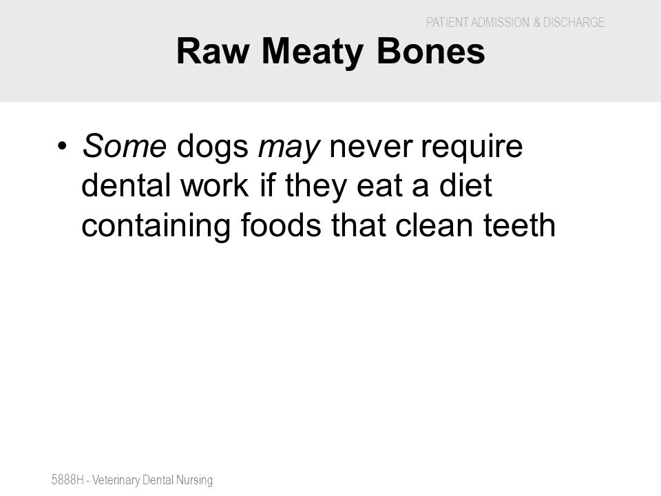Raw Meaty Bones Some dogs may never require dental work if they eat a diet containing foods that clean teeth.