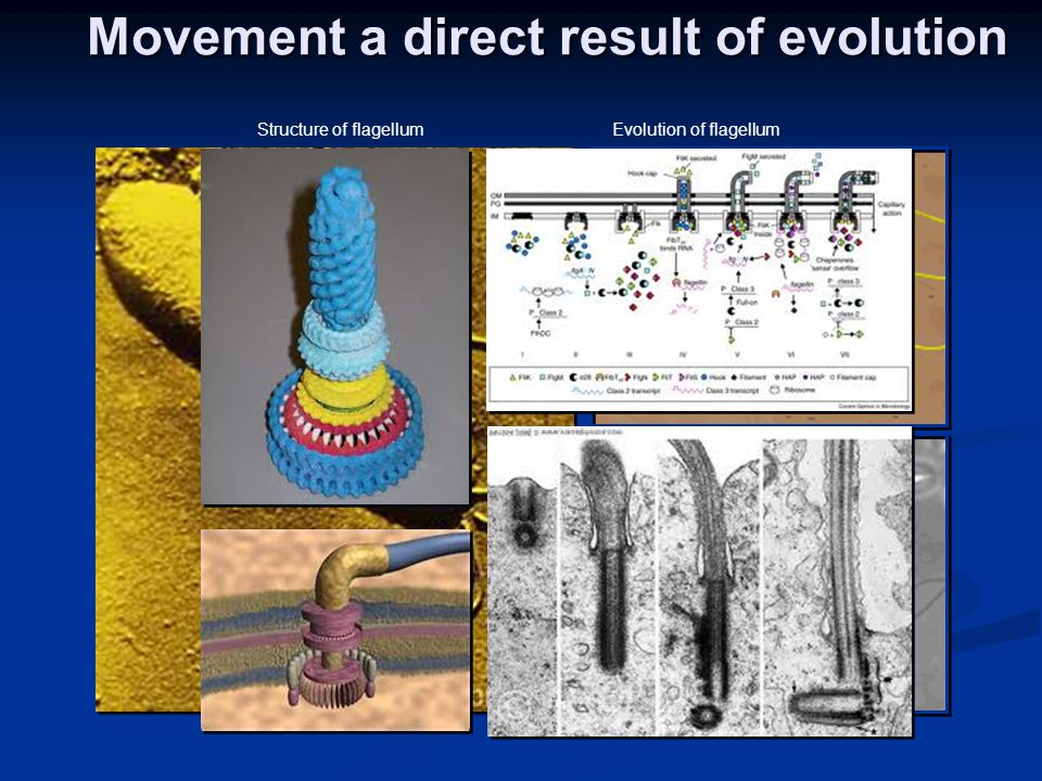 Movement a direct result of evolution