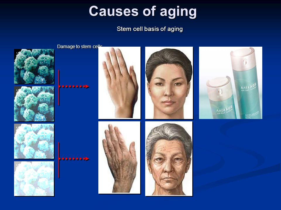 Stem cell basis of aging