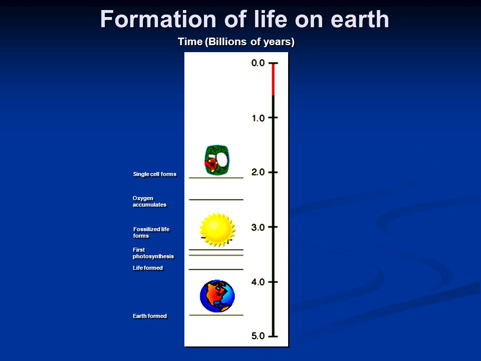 Formation of life on earth