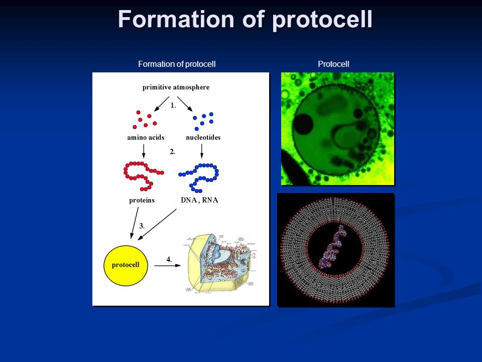Formation of protocell