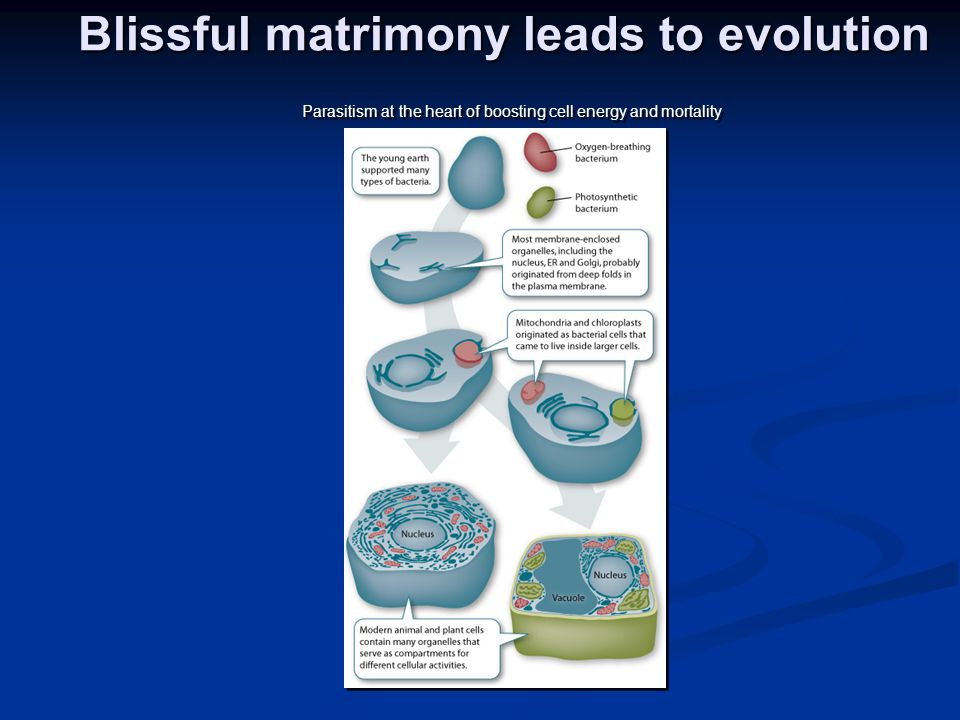 Blissful matrimony leads to evolution