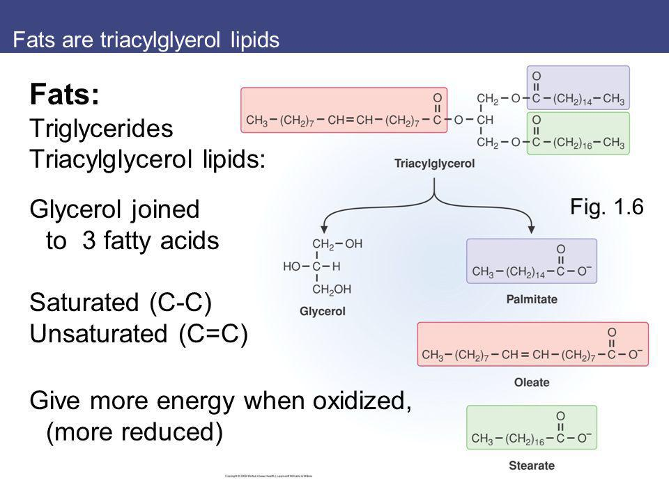 Fats are triacylglyerol lipids