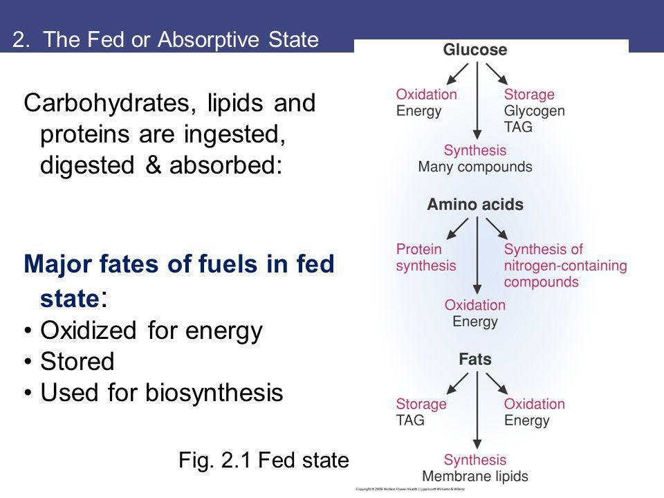 2. The Fed or Absorptive State