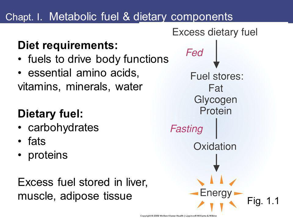 Chapt. I. Metabolic fuel & dietary components