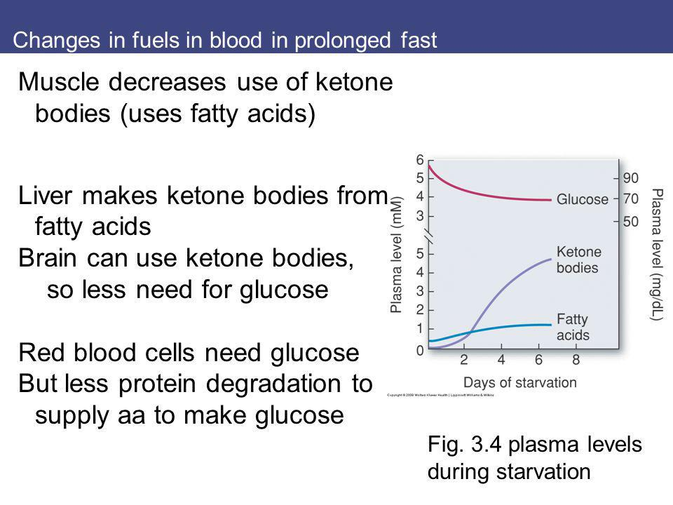 Changes in fuels in blood in prolonged fast