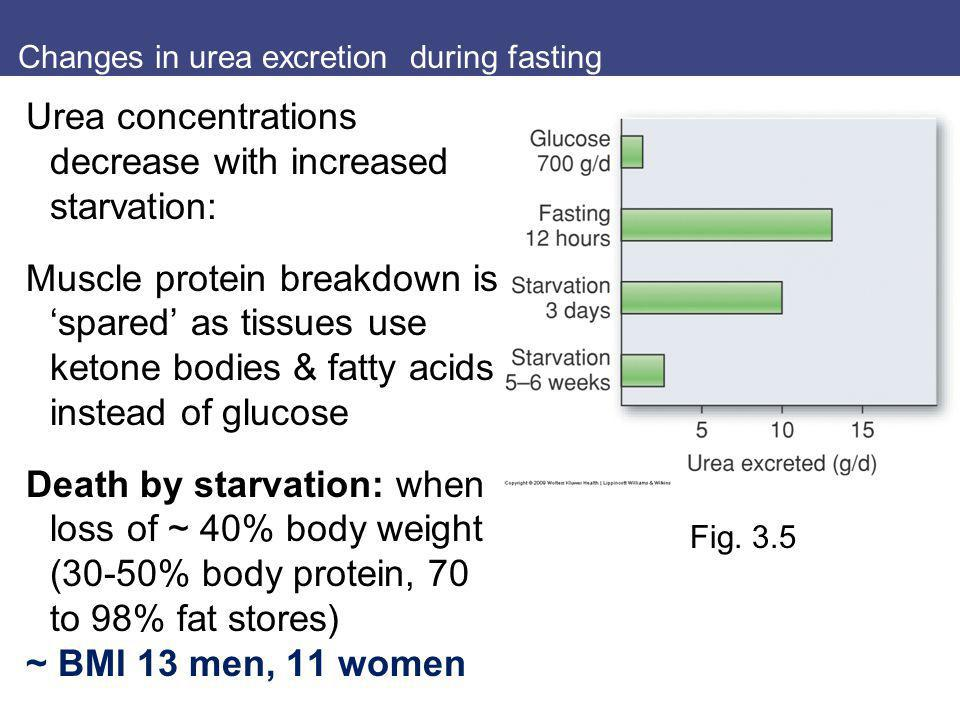 Changes in urea excretion during fasting