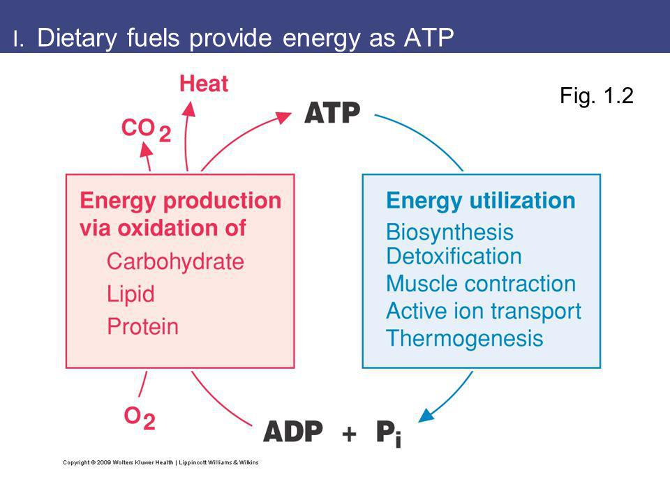 I. Dietary fuels provide energy as ATP